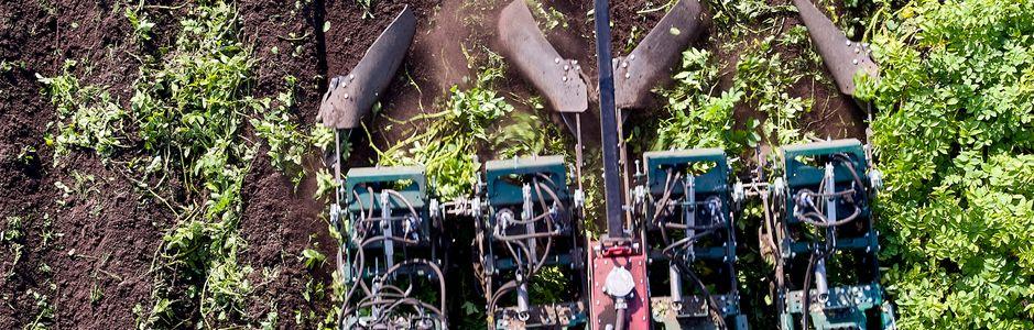 Данияның MSR Plant Technology компаниясы картопты өлтіретін машинаны сатады